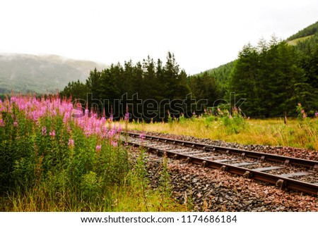 Pink flowers by the railroad tracks in the Scottish Highlands