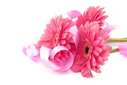 Pink flowers Gerbera with ribbon isolated on white background