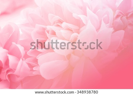 Stock Photo Pink flowers in soft style for background