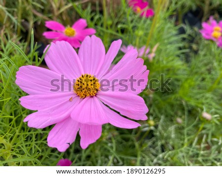 Photo of  Pink flowers in the garden