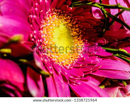 pink flowers on a macro scale #1338721964
