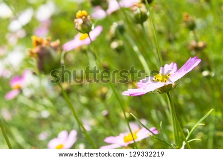 pink flowers on green grass background