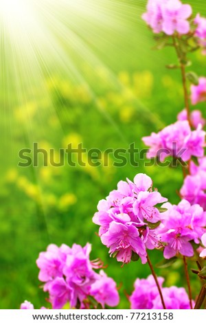 Pink flowers on the sun