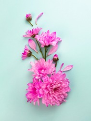 Pink flowers on turquoise, blue background. Beautiful close up florist composition. Minimal flat lay concept. Summer, springtime banner template. Vibrant blooming top view clipart