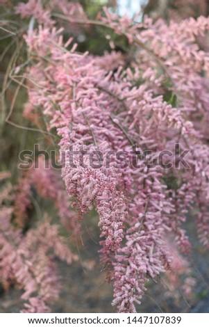 Pink flowers pink wallpaper bloosom