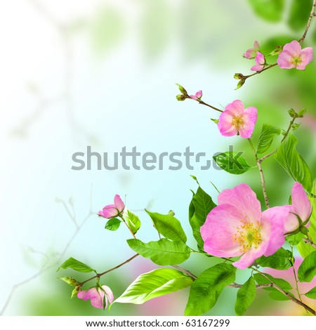Pink flowers rose on green background - stock photo