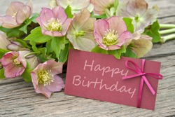 pink flowers with birthday card/birthday card/Christmas Rose