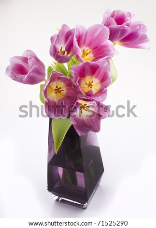 pink flowers with yellow centers isolated against white