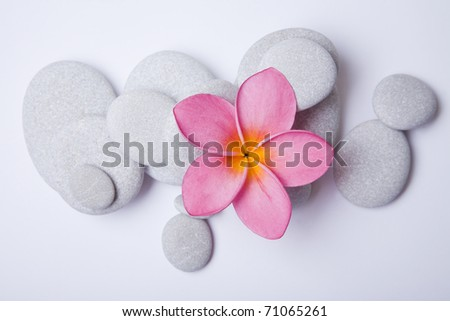 Pink frangipani flower and white pebbles. High key zen.