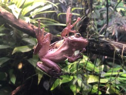 Pink frog on a window