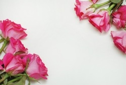 Pink Fucsia Rose Flower Bouquet Isolated with Copy Space. flat Lay. flowers.