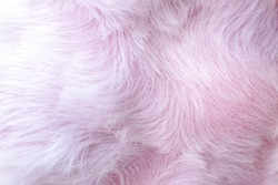Pink Fur Texture Background Close Up Use Beautiful Abstract Feather Backdrop Design