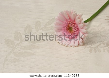 pink gerber daisy on dinning table