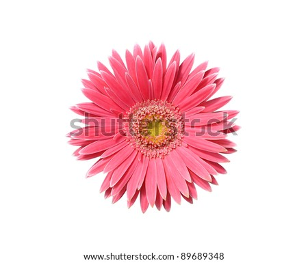 Pink gerber isolated on white background - stock photo