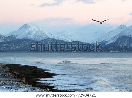 Pink glow of sunset on an Alaskan beach in winter with a flying eagle and mountains in the background.