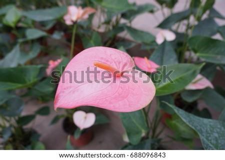 pink heart #688096843