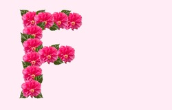 Pink Hibiscus Flower Alphabet F on isolated Background. Beautiful China Rose flower letter. Beautiful Double headed Pink Hibiscus Flower font