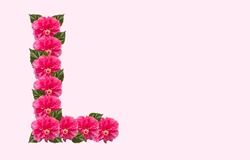 Pink Hibiscus Flower Alphabet L on isolated Background. Beautiful China Rose flower letter. Beautiful Double headed Pink Hibiscus Flower font