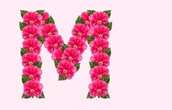 Pink Hibiscus Flower Alphabet M on isolated Background. Beautiful China Rose flower letter. Beautiful Double headed Pink Hibiscus Flower font