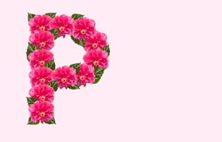 Pink Hibiscus Flower Alphabet P on isolated Background. Beautiful China Rose flower letter. Beautiful Double headed Pink Hibiscus Flower font