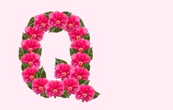 Pink Hibiscus Flower Alphabet Q on isolated Background. Beautiful China Rose flower letter. Beautiful Double headed Pink Hibiscus Flower font