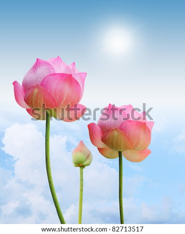 pink lotus and sun light in blue sky background