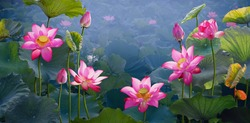 Pink lotus banners,  oriental floral background with pink lotus flowers