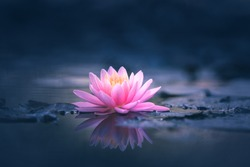 Pink Lotus Flower Or Water Lily Floating On The Water