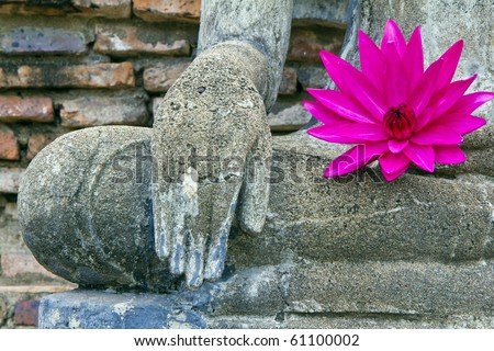 pink lotus on fetch Buddha , city old Sukothai monk , Thailand ,