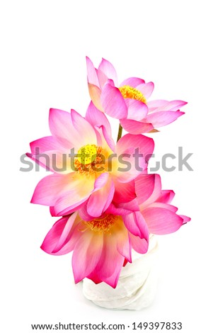 Pink Lotus On Isolate White Background.