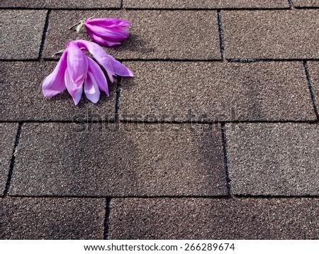Pink magnolia flowers on asphalt shingles roof