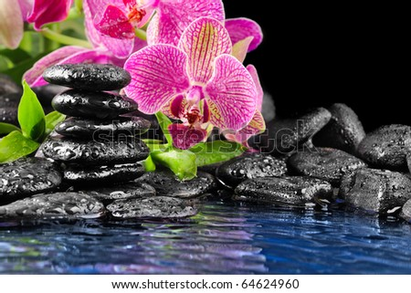 Pink orchid and and stones in the water