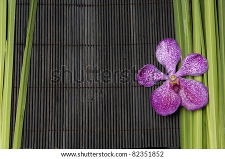 Pink orchid and bamboo grove and plant on bamboo stick straw mat