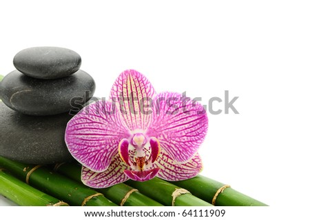 Pink orchid and stones on the bamboo grove