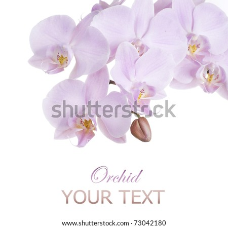 Pink Orchid border over white - stock photo