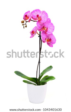 Pink orchid flower #1043401630
