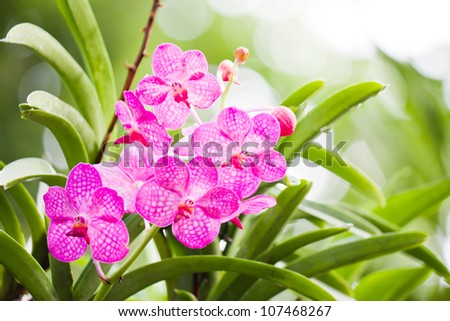 pink orchid flower - stock photo
