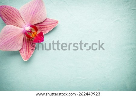 pink orchid flower. greeting...