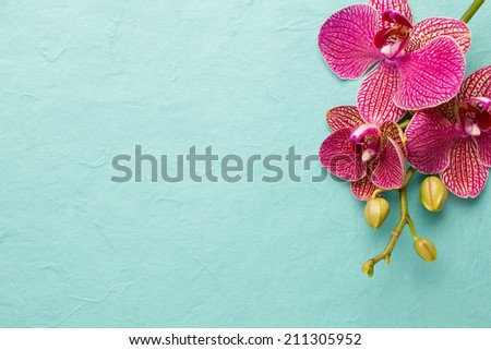 Pink orchid flowers on a pastel background. Pink orchid background. #211305952