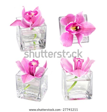 pink orchid in vase isolated on white