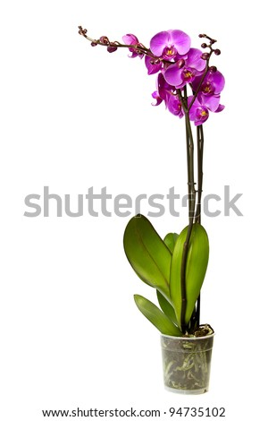 Pink orchid isolated on a white background. #94735102
