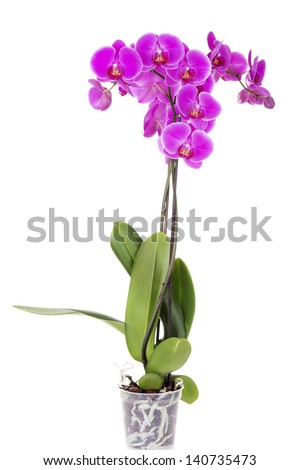 Pink orchid isolated on white background. #140735473