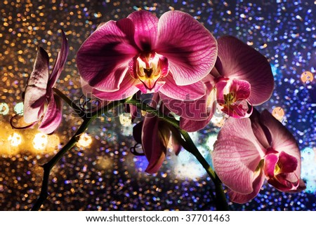 Pink orchid on colored background with drops