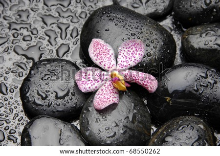 Pink orchid on pebble in water drops