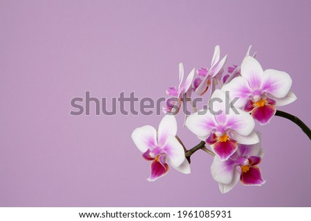 pink orchid on pink background Foto stock ©