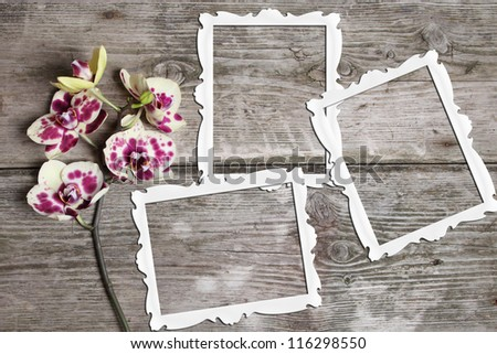 Pink orchid (Phalaenopsis) with frames on a wooden background