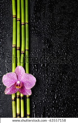 pink orchid with bamboo grove on black - stock photo