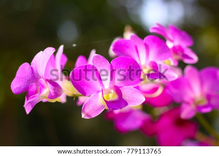 pink orchid with blurred...