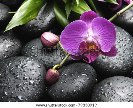 pink orchid with bud on wet pebble and green leaf