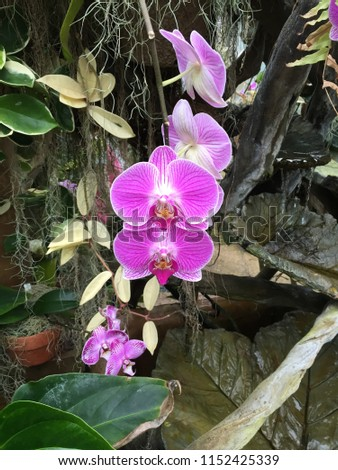 Pink Orchids at Duke Farms